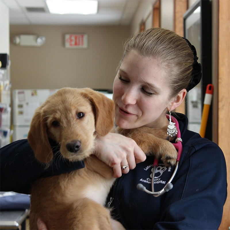 Jolene Lauer, Veterinary Technician / Surgery Technician